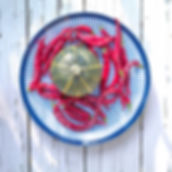 Blue striped platter with freshly picked bright red peppers surround a yellow striped Eightball squash on a summer afternoon. Photograph by Ken Schuster.