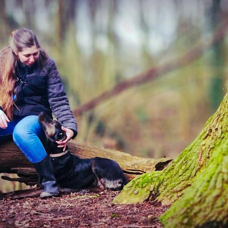 Die Angst des Hundes ignorieren