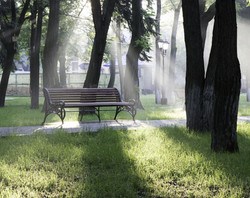 bench-environment-foggy-grass-269176_edi
