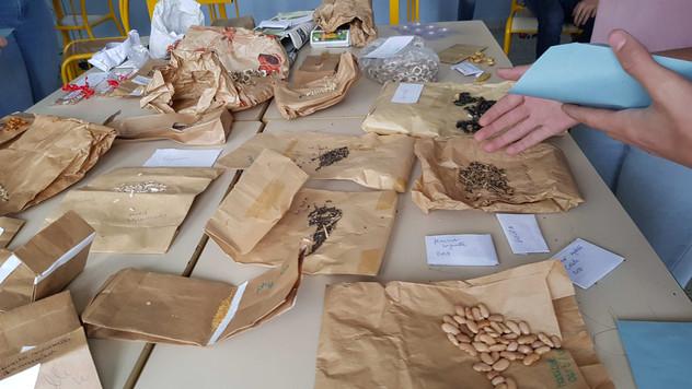 Tri et répartition des graines...