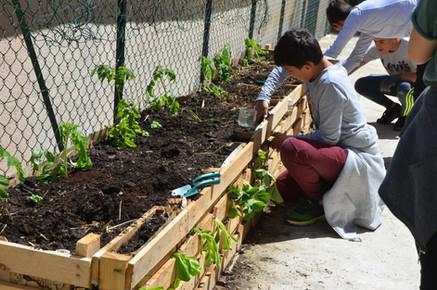 Plantation de salades à la verticale!...