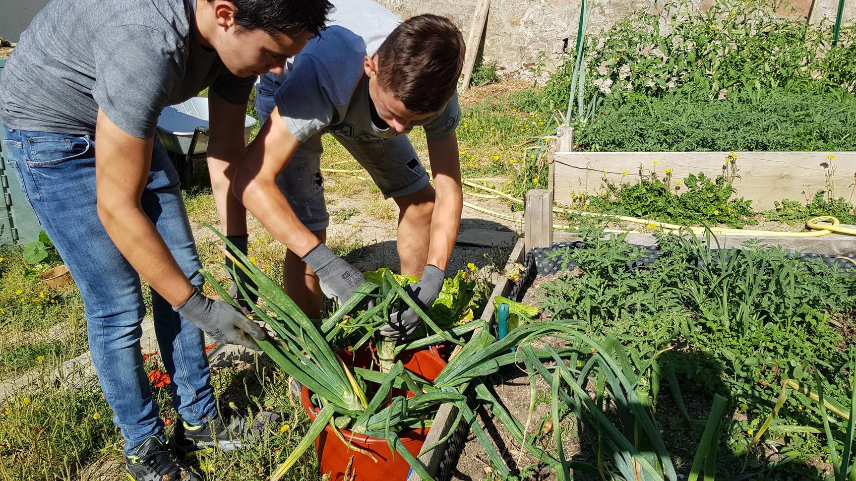 Des légumes Bio produit par les élèves...