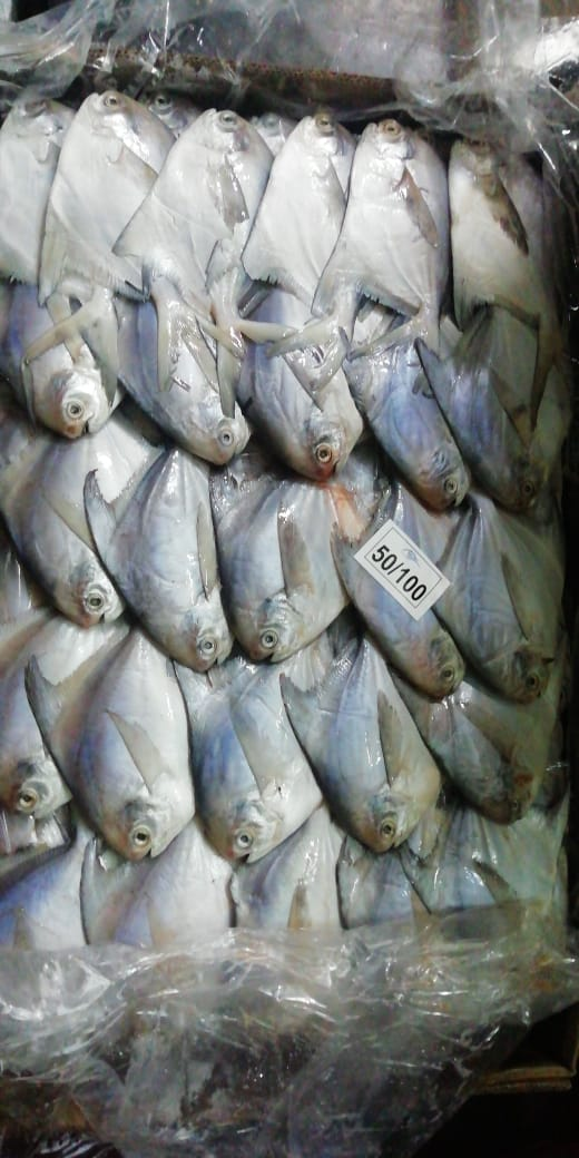 White Pomfret Fish