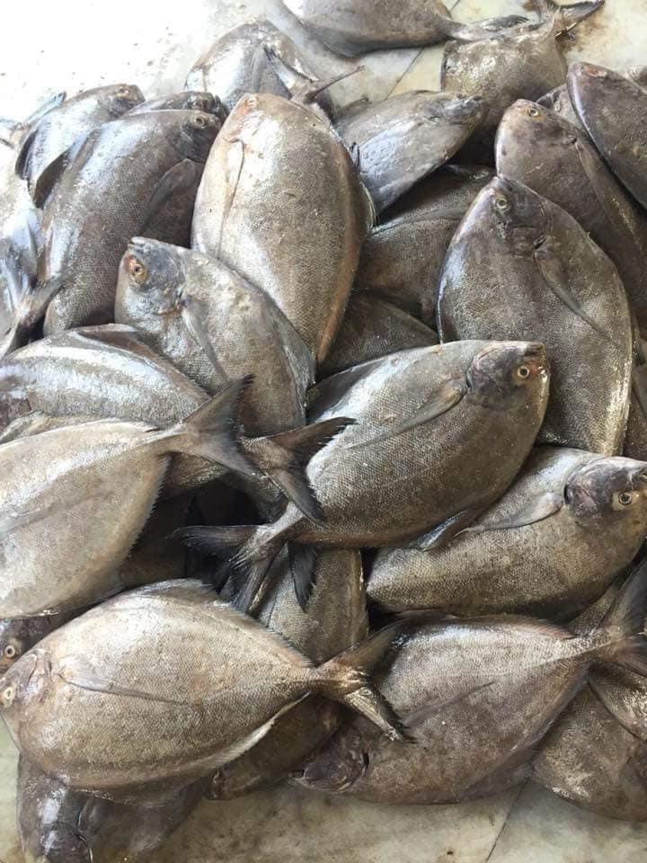 Black Pomfret Fish