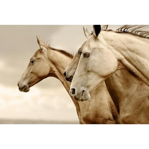 Sepia Horses Reversed