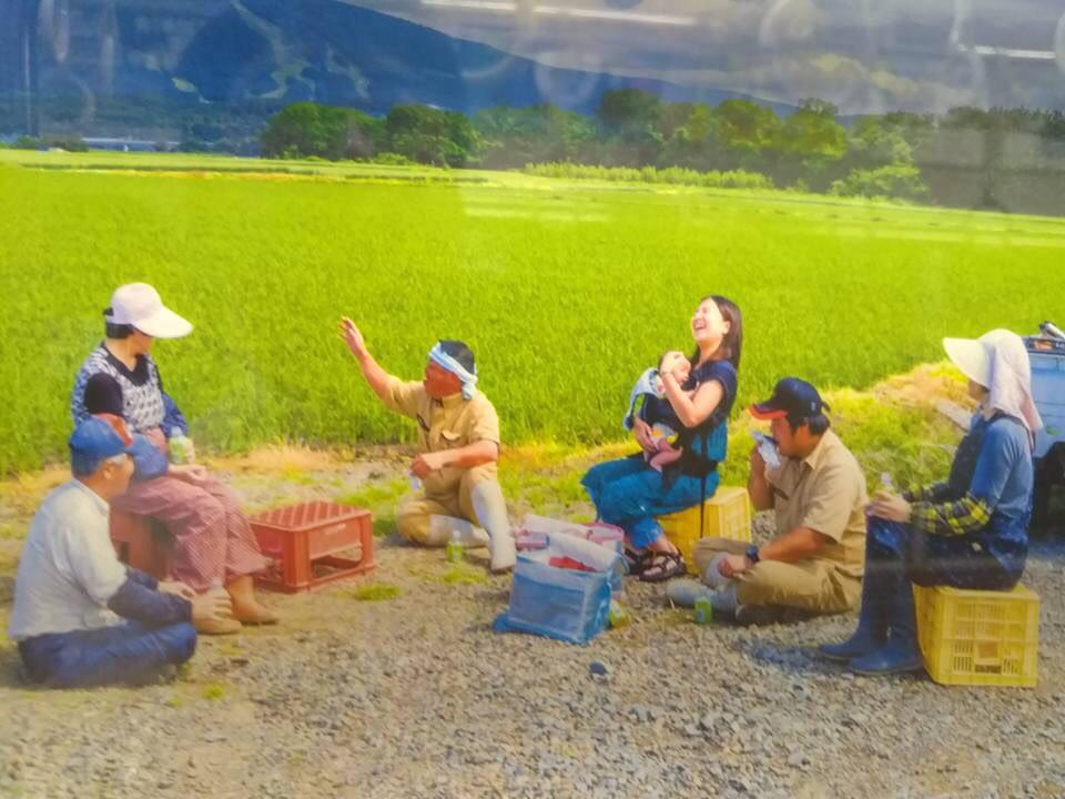 エアドゥのポスターの水田のお米「ゆめぴりか」
