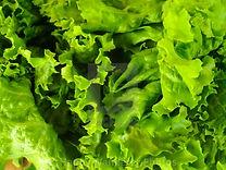 Leafy Vegetables.jpg