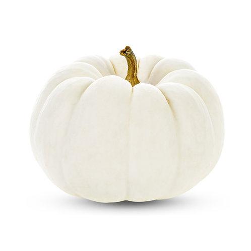 Pumpkin White - Squash Kadu - 1 Piece