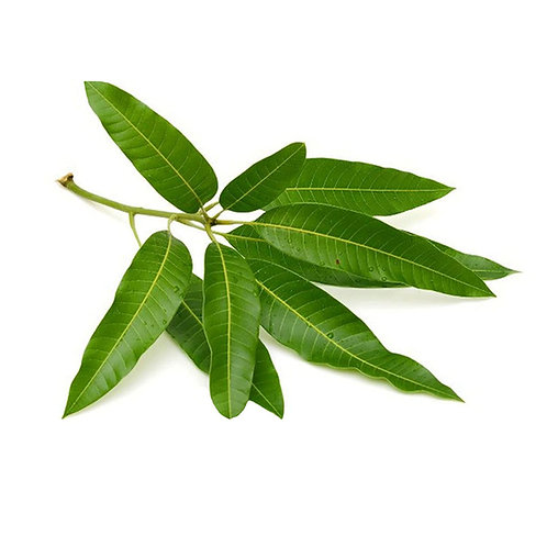 Mango leaves - 1 Pack (5 Leaves)