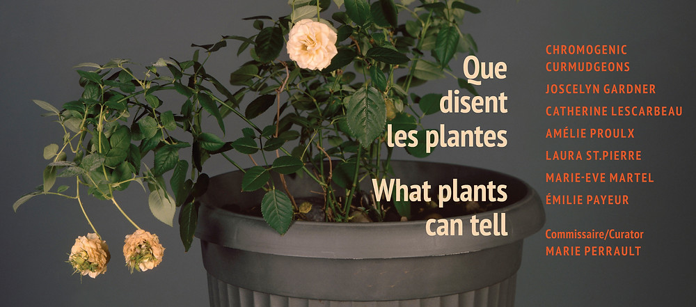 What plants can tell