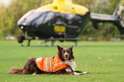 Dog Search Team