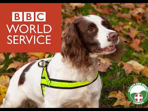 BBC World Service - K9 Team