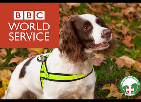 BBC World Service - K9 Team