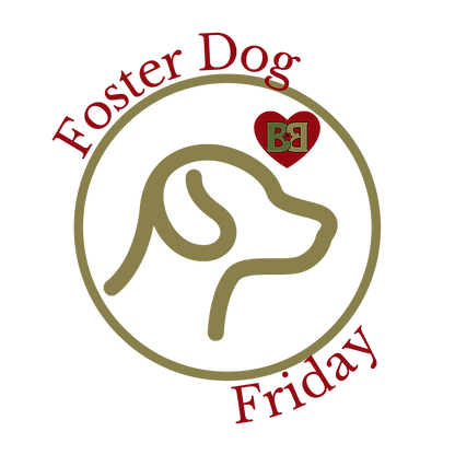 Foster Dog (1).png