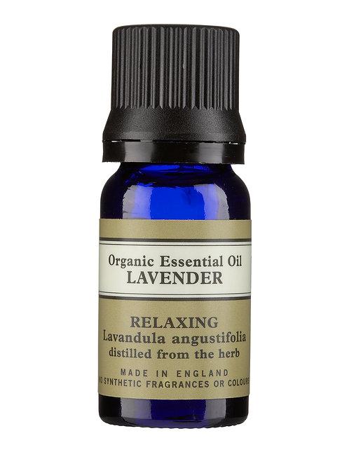 Minyak Esensial Organik Lavender