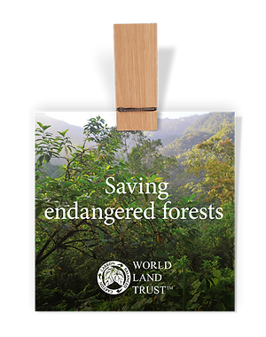 campaigns-save-forests.png