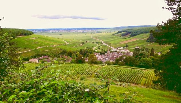 Burgundy-Pernand-Vergelesses.jpg
