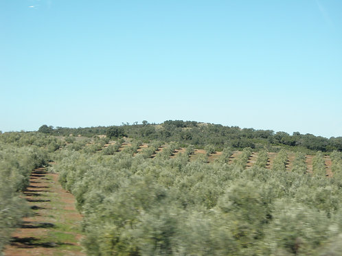 Languedoc Roussilon - Single Occupancy Full Fee/Person
