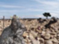 Geology in a Vineyard in France