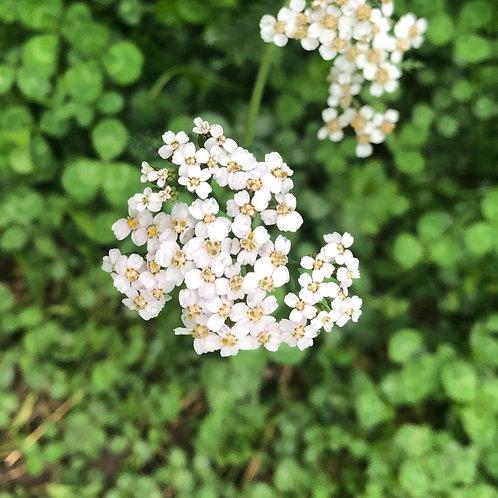 Plant Medicine III: Herbs, Flowers and Weeds