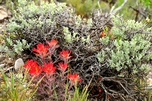 Plant Medicine V: Mountains and High Deserts