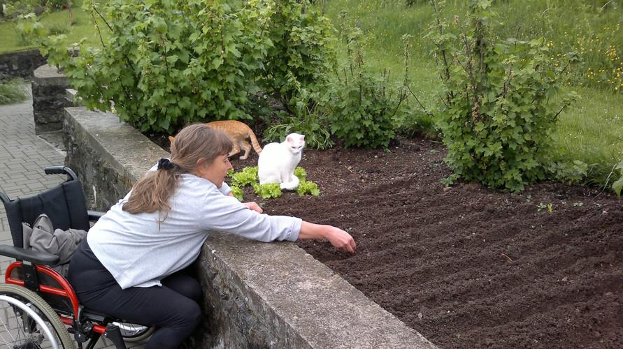 Vrtnarjenje: ob družbi muc v svojem prostem času pridelujem hrano.  Gardening: in my spare time I grow food in the company of kittens.