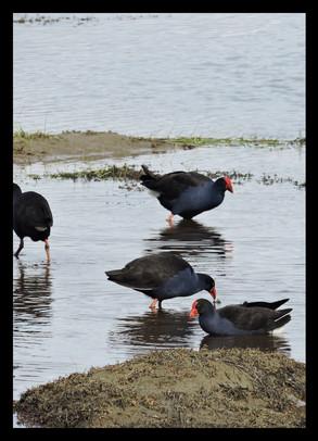 blackwater16.jpg