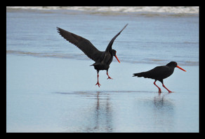 bird38.jpg