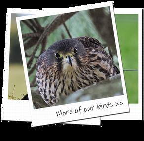 photoalbumnbirds2.png