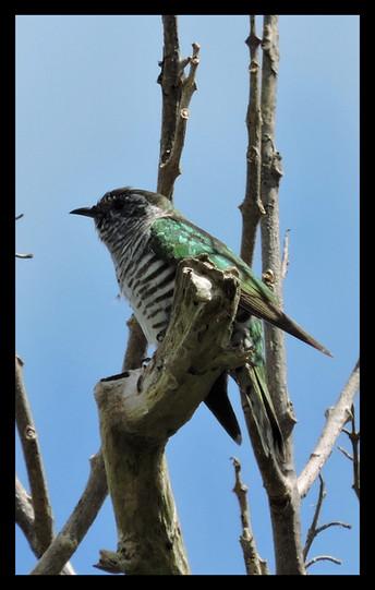 bird56.jpg