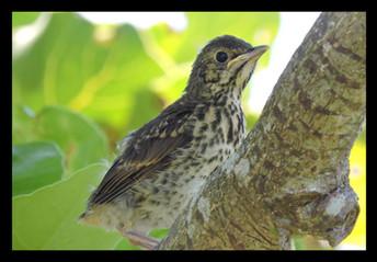bird54.jpg