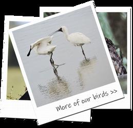 photoalbumnbirds3.png
