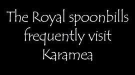 spoon20.jpg