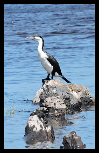 bird36.jpg