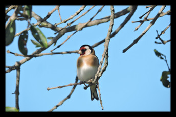 bird25.jpg