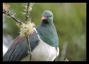 bird59.jpg