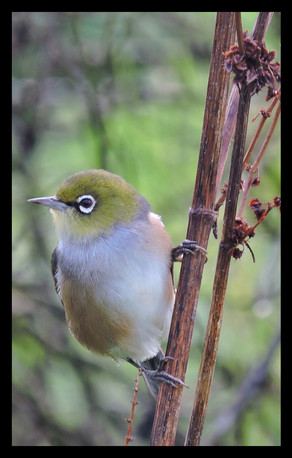bird63.jpg