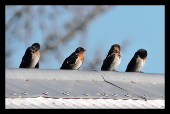 bird24.jpg