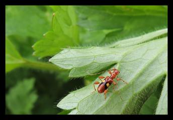 flower beetle.jpg