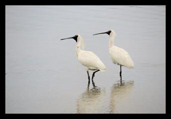 bird69.jpg