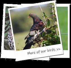photoalbumnbirds1.png