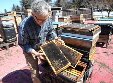 N.H. beekeepers ask for help tracking honeybee deaths over the winter