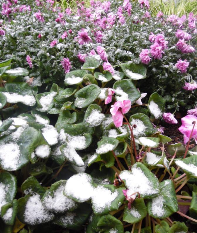 "Photograph ""First Snow"" by Alexandra DiFrancesco"