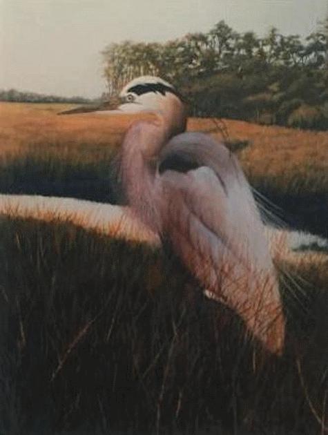 """Oil Painting: """"Edisto Heron"""" by Ann Peake"""