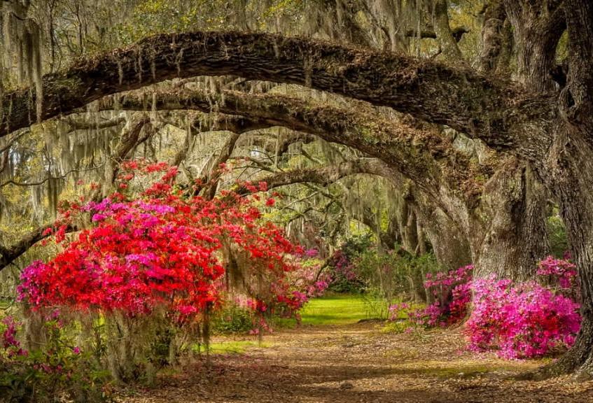 Azalea Oak Arch