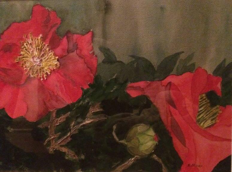 Camellia Trio