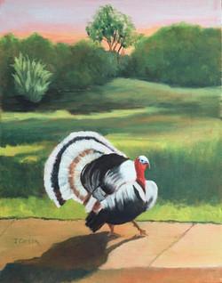 Tom The Friendly Turkey