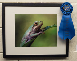 First Place-Photography