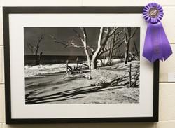 Cindy  Fox Memorial Award-Photo