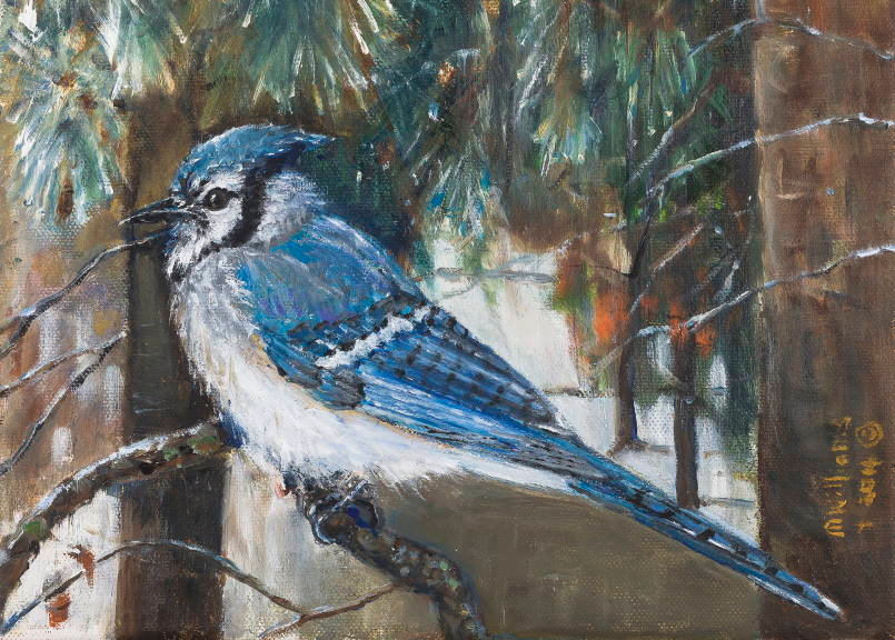 """Blue Jay"" - a painting by Mary Williams"